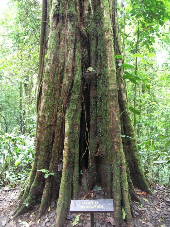 COTER RAIN FOREST