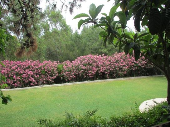 KAYA IZMIR Gardens