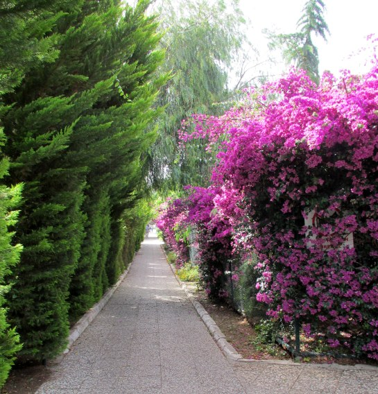 KAYA IZMIR Beautiful trees & plants